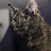 Adopt A Pet :: Emmie - Lombard, IL