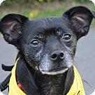 Adopt A Pet :: Winston