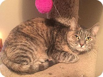 Calico Cat for adoption in Hazlet, New Jersey - Morgana