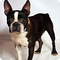 Adopt A Pet :: Frances Boston - St. Louis, MO