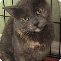 Adopt A Pet :: Stormy - Breinigsville, PA