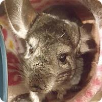 Adopt A Pet :: Simone - Patchogue, NY