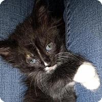 Adopt A Pet :: Mae - Austin, TX
