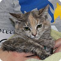 Adopt A Pet :: ANDIE - Las Vegas, NV