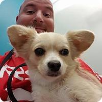 Adopt A Pet :: Josey - Troy, MI