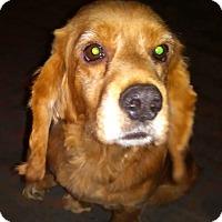 Adopt A Pet :: Frederick- ADOPTED - Somerset, KY