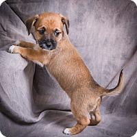 Adopt A Pet :: DORI - Anna, IL