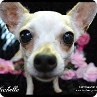 Adopt A Pet :: Michelle - Simi Valley, CA