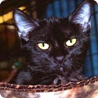 Adopt A Pet :: Tootie - Sacramento, CA