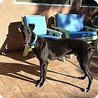 Adopt A Pet :: Eugene - Carlsbad, CA