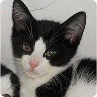 Adopt A Pet :: Blaze - Maywood, NJ