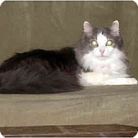 Adopt A Pet :: Dusty - Xenia, OH