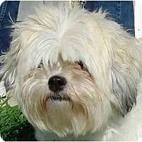 Adopt A Pet :: Sophie-VA - Mays Landing, NJ