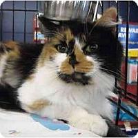 Adopt A Pet :: Kat - Riverside, RI