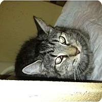 Adopt A Pet :: Evie - Clay, NY
