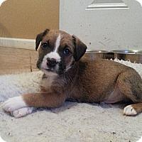 Adopt A Pet :: Seger - Russellville, KY
