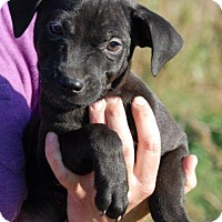 Adopt A Pet :: Zane - Adoption Pending - Milford, CT