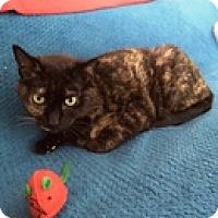 Adopt A Pet :: Rena - Vancouver, BC