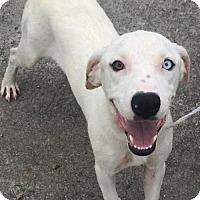 Adopt A Pet :: Snow White **FOSTER NEEDED** - Christiana, TN