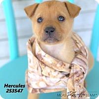 Adopt A Pet :: LUKE - Conroe, TX