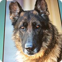 Adopt A Pet :: RUDOLPH VON RUTHEN - Los Angeles, CA