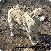 Adopt A Pet :: Fiona - Fayette, MO