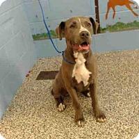 Adopt A Pet :: A493582 - San Bernardino, CA