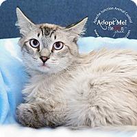 Adopt A Pet :: Fluffy - Apache Junction, AZ