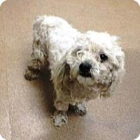 Adopt A Pet :: Buster - Las Vegas, NV