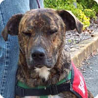 Adopt A Pet :: Zena - Grants Pass, OR