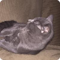 Adopt A Pet :: Jack - Riverside, RI