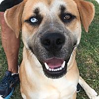 Adopt A Pet :: Rufas - Santa Ana, CA