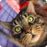 Adopt A Pet :: Percival - Baltimore, MD