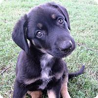 Adopt A Pet :: Echo - Trenton, NJ