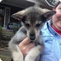 Adopt A Pet :: Fran - Memphis, TN