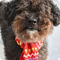 Adopt A Pet :: Rocky - Dublin, CA