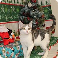 Adopt A Pet :: Lucky - Stockton, CA
