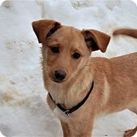 Adopt A Pet :: Rez - Sawyer, ND