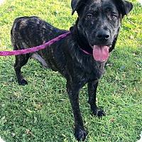 Adopt A Pet :: Lady - Mission Viejo, CA
