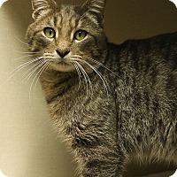 Adopt A Pet :: Jack Frost - Ann Arbor, MI