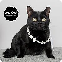 Adopt A Pet :: Ms Norris - Wyandotte, MI