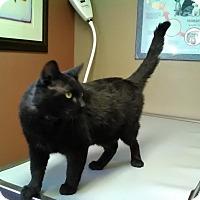 Adopt A Pet :: Champ - Redwood Falls, MN