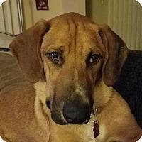 Adopt A Pet :: Scooby - San Diego, CA