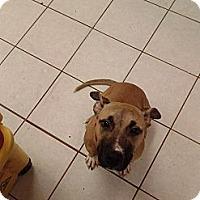 Adopt A Pet :: Spirt - manville, NJ