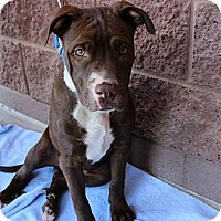 Adopt A Pet :: Dually - Mesa, AZ