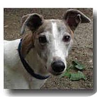 Adopt A Pet :: Spunky - Roanoke, VA