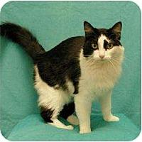 Adopt A Pet :: Scarlet - Sacramento, CA