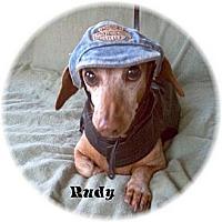 Adopt A Pet :: Rudy - Tucson, AZ
