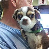 Adopt A Pet :: Ewok - Cumberland, MD