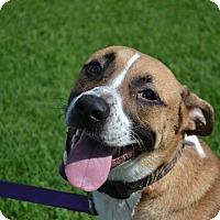Adopt A Pet :: Dawson - Adoption Pending - Derry, NH